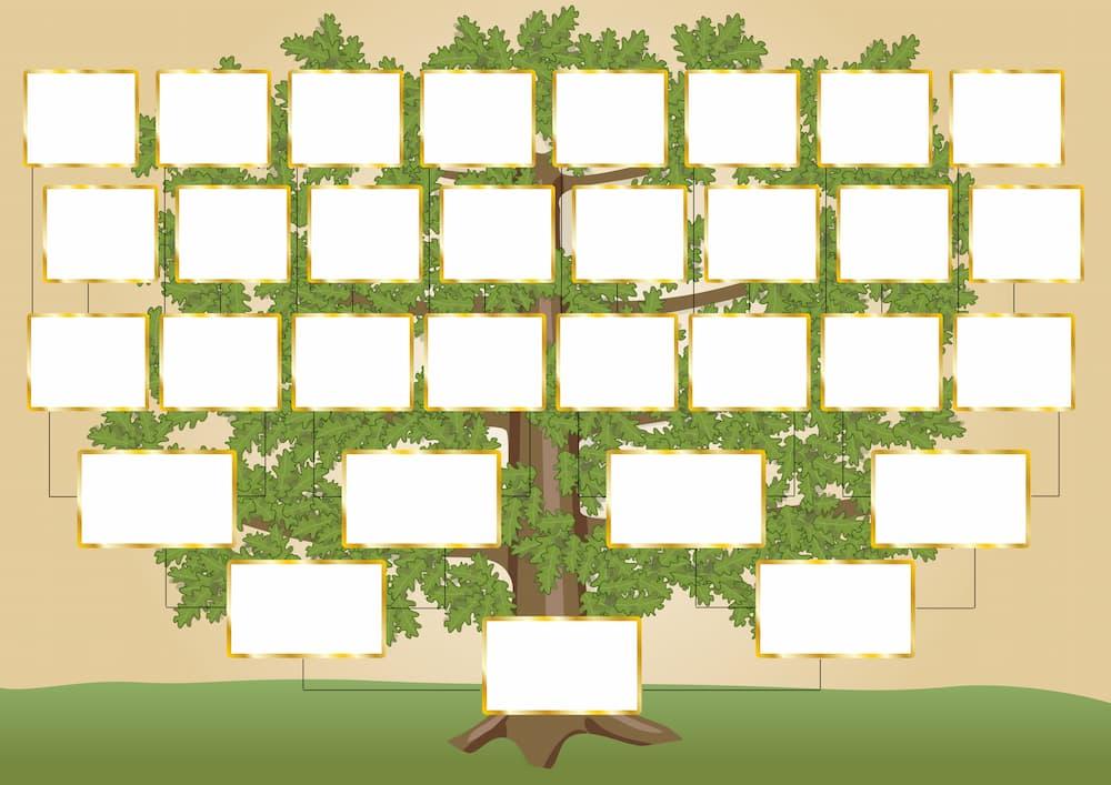 Stammbaum mit Platzhaltern für Namen und Fotos © Charlie, stock.adobe.com